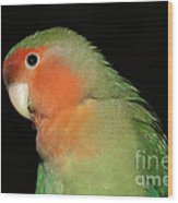 Peach Faced Lovebird Wood Print