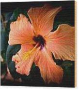 Peach Hibiscus Bloom Wood Print