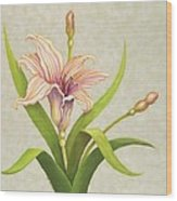 Peach Lily Wood Print by Carol Sabo
