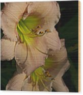 Peach Parfait Daylilies Wood Print