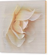 Peach Rose Tranquillity Wood Print
