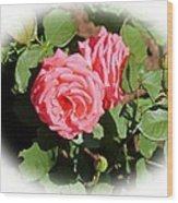 Peach Rose Wood Print by Victoria Sheldon