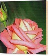 Peach Rose Watercolor Wood Print