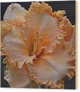 Peach Ruffled Lily Wood Print