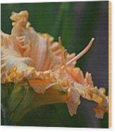 Peach Rufflette - Lily Wood Print