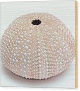 Peach Sea Urchin White Wood Print