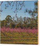 Peach Tree A Bloom Wood Print