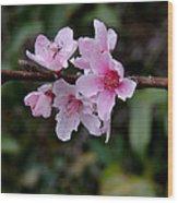 Peach Tree Blooms Miskitos Swoon Wood Print