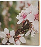 Peach Tree Blossoms Wood Print