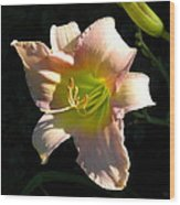 Peaches And Cream Wood Print