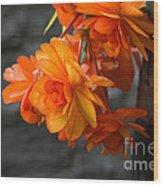 Peachy Begonias Wood Print