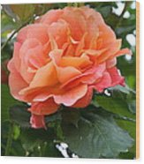 Peachy Elegance Wood Print