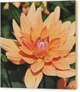 Peachy Petals Wood Print