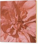 Peachy Pink Jasper Rose Wood Print