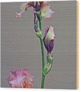 Peachy Prize Winning Iris Wood Print