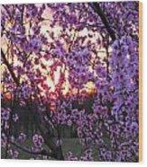 Peachy Sunset 1 Wood Print