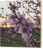 Peachy Sunset 2014 #2 Wood Print