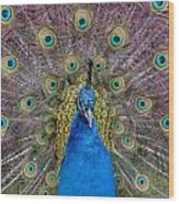 Peacock And Proud Plumage Wood Print