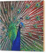 Peacock And Red Barn Wood Print