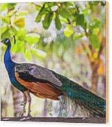 Peacock. Bird Of Paradise Wood Print
