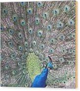 Peacock Bow Wood Print