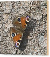 Peacock Butterfly Wood Print by Frits Selier