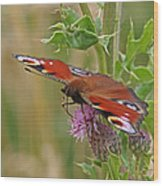 Peacock Butterfly On Thistle Square Wood Print