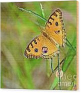 Peacock Butterfly Wood Print