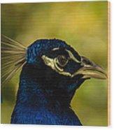 Peacock Closeup Wood Print