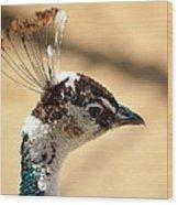 Peacock Crest Wood Print