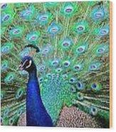 Peacock Delight Wood Print