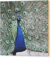 Peacock Fanning Wood Print