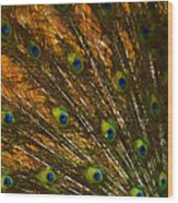 Peacock Feathers 2 Wood Print
