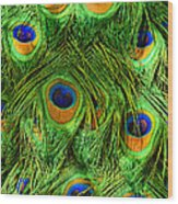 Peacock Feathers Wood Print