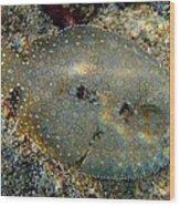 Peacock Flounder Wood Print