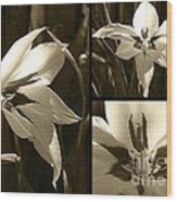 Peacock Gladiolus Triptych Wood Print