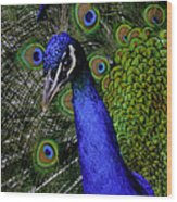 Peacock Head And Tail Wood Print