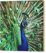 Peacock - Impressions Wood Print