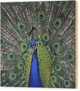 Peacock In Open Feathers, Victoria, Bc Wood Print