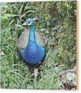 Peacock In The Brush Wood Print