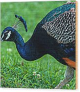 Peacock Portrait 5 Wood Print