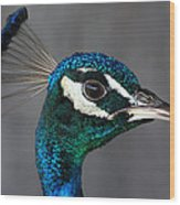 Peacock Profile Wood Print