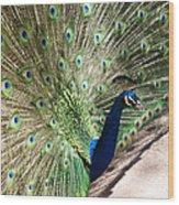 Peacock Show Wood Print