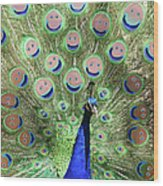 Peacock Smiles Wood Print