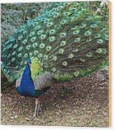 Peacock Strut Wood Print