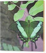 Peacock Swallowtail Wood Print