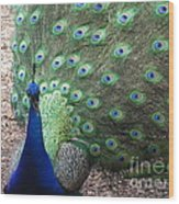 Peacock Up Close Wood Print