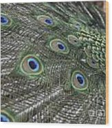Peacock's Feathers Wood Print