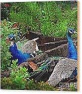 Peacocks In The Garden Wood Print