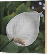 Peacy Lily Wood Print